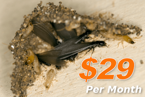Termite Control in Millington